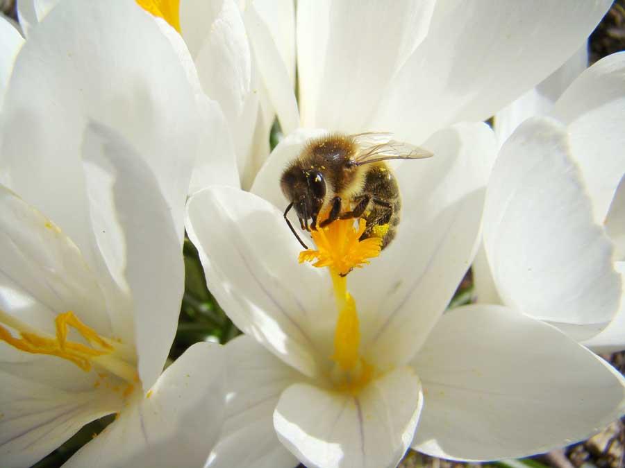 Get unstuck bee